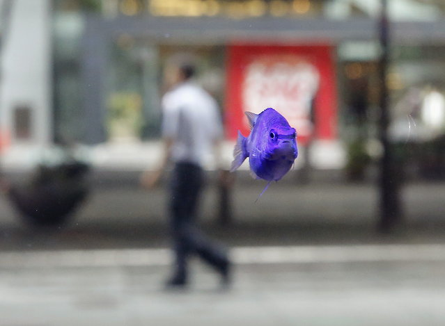 A tropical fish swims in a fish tank as a passer-by walks at a business district in Tokyo, July 2, 2015. (Photo by Toru Hanai/Reuters)