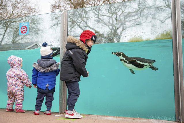 Children visit the penguins at London Zoo in Regent's Park, London, Monday April 12, 2021. Millions of people in England will get their first chance in months for haircuts, casual shopping and restaurant meals on Monday, as the government takes the next step on its lockdown-lifting road map. (Photo by Aaron Chown/PA Wire via AP Photo)