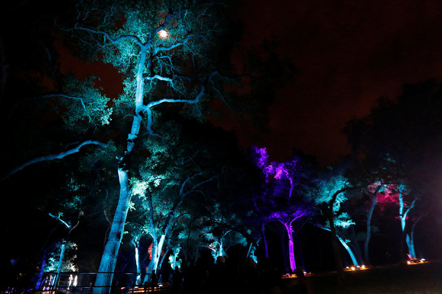 "Visitors walk through ""Symphony of Oaks"" which is part of the exhibit ""Enchanted: Forest of Light"" at Descanso Gardens in La Canada Flintridge, California U.S., December 9, 2016. (Photo by Mario Anzuoni/Reuters)"
