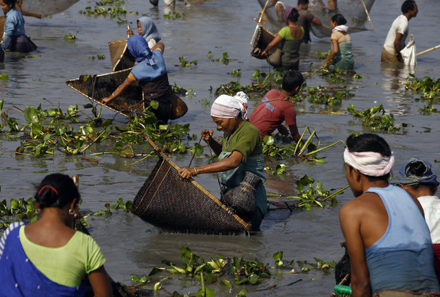 Villagers with their fishing nets participate in a community fishing event at a lake at Sonapur area in Assam January 14, 2015. (Photo by Reuters/Stringer)
