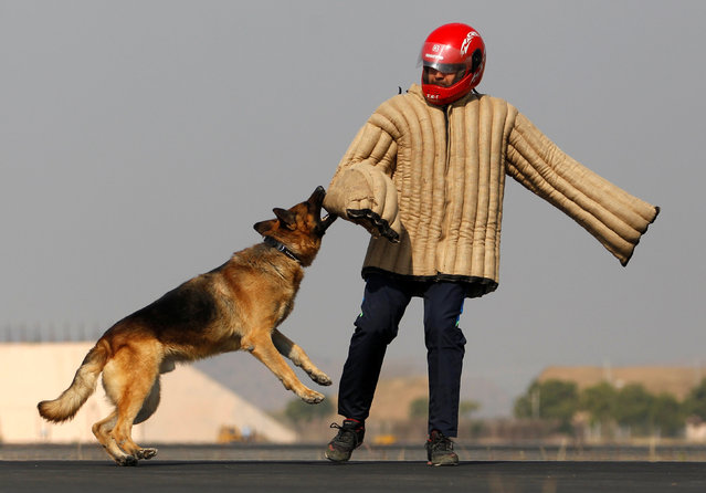 """A trained dog attacks an Indian Air Force soldier wearing protective gear as they demonstrate skills during a """"Know your Forces"""" campaign at Bhuj air base in the western state of Gujarat, India, January 25, 2017. (Photo by Amit Dave/Reuters)"""