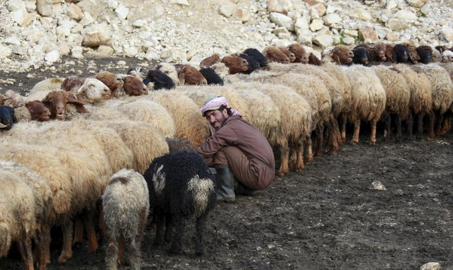 A man milks sheep between the villages of Meis al-Jabal and Houla in south Lebanon, March 18, 2016. (Photo by Aziz Taher/Reuters)