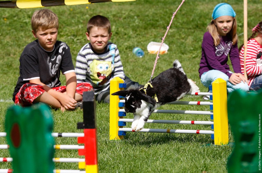 Rommerz Rabbit Hopping Competition