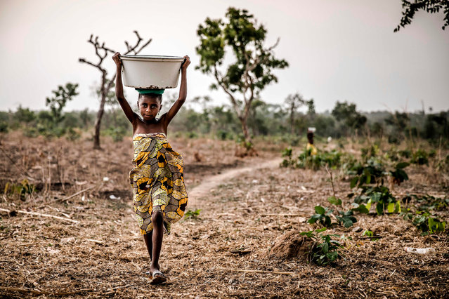 A Fulani girl carries a water bowl on the way to her family's house at Kachia Grazing Reserve, Kaduna State, Nigeria, on April 16, 2019. Kachia Grazing Reserve is an area set aside for the use of Fulani pastoralist and it is intended to be the foci of livestock development. The purpose for the grazing reserves is the settlement of nomadic pastoralists and inducement to sedentarisation through the provision of land for grazing and permanent water as way to avoid conflict. (Photo by Luis Tato/AFP Photo)