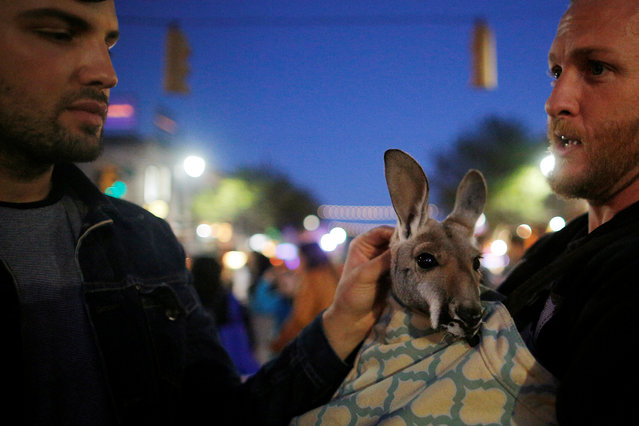 A man carries a kangaroo along 6th Street during the South by Southwest Music Film Interactive Festival 2017 in Austin, Texas, U.S., March 14, 2017. (Photo by Brian Snyder/Reuters)