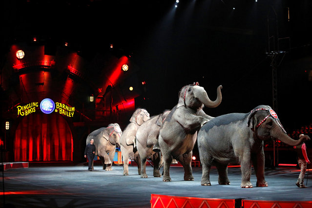 """Elephants perform during Ringling Bros and Barnum & Bailey Circus' """"Circus Extreme"""" show at the Mohegan Sun Arena at Casey Plaza in Wilkes-Barre, Pennsylvania, U.S., April 29, 2016. (Photo by Andrew Kelly/Reuters)"""