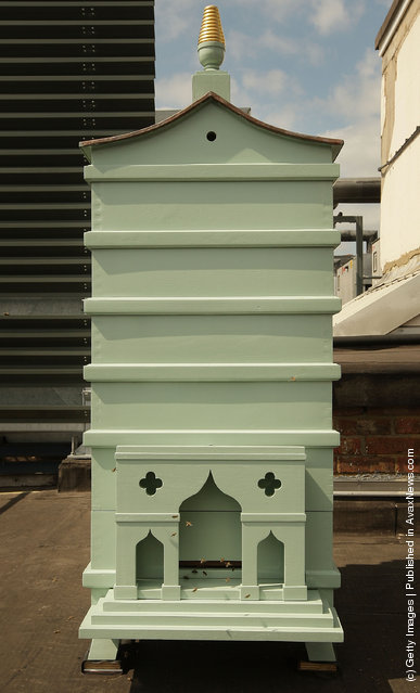 Fortnum And Mason Beehives Take Up Residence On The Roof