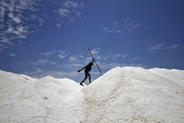 A worker walks through a salt pan on the eve of May Day or Labour Day on the outskirts of the southern Indian city of Chennai April 30, 2014. India is the third largest salt producing country in the world after China and U.S. with global annual production about 230 million tonnes, according to government data. (Photo by Reuters/Babu)