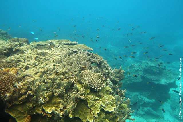 Fish are seen swimming around coral formations in Lady Elliot Island, Australia