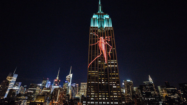 Empire State Building Brings Endangered Animals