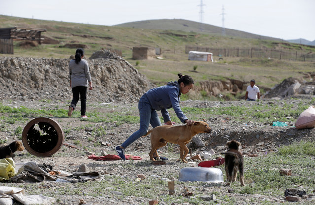 The 14-year-old daughter (C) of villager Munkhtsetseg (L) plays with a dog next to their tent at a village on the outskirts of Ulan Bator, Mongolia, June 27, 2016. (Photo by Jason Lee/Reuters)