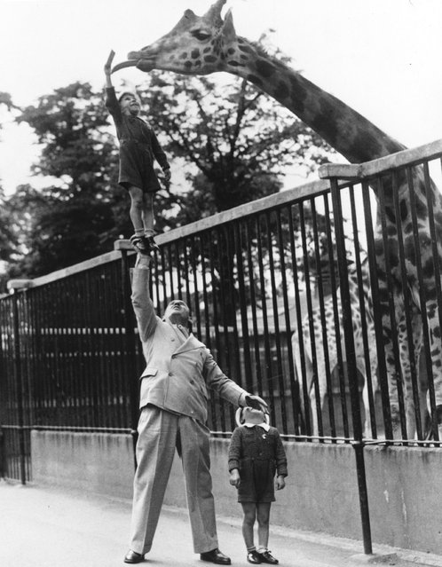 Circus strongman Paul Remos and his six and seven year old sons, who all appear in the revue Wonderful World, feeding a giraffe at London Zoo, circa 1950. (Photo by General Photographic Agency)