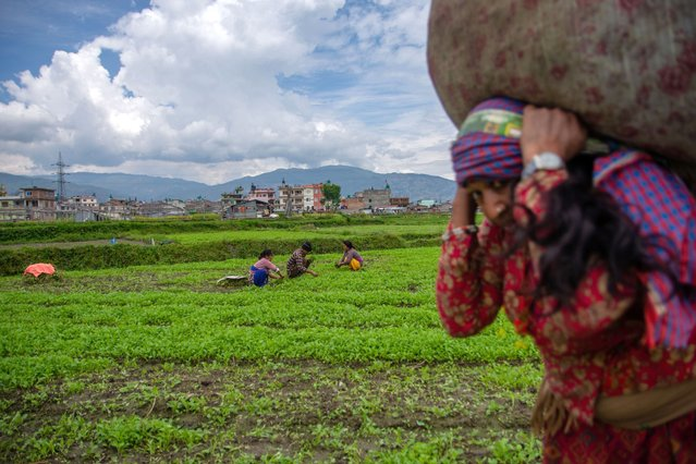 A woman returns home carrying vegetable on her back (foreground) while other farmer works on vegetable field (background) during the 43rd day of the lockdown imposed by the government as a preventive measure against the spread of COVID-19 coronavirus, in Kathmandu, Nepal on Tuesday, May 5, 2020. (Photo by Rojan Shrestha/NurPhoto via Getty Images)