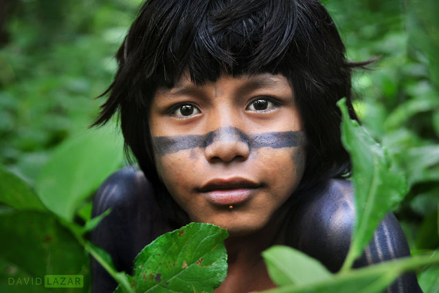 Amazon Tribe By David Lazar