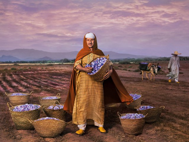 """""""Saffron and Freedom"""". Mhamd Id Taleb, President of the saffron agricultural cooperative and Slow Food Presidium in Taliouine, a village in the south east of Morocco, the freedom of his lifestyle derives from the cultivation of saffron. (Photo by Steve McCurry/2015 Lavazza Calendar)"""