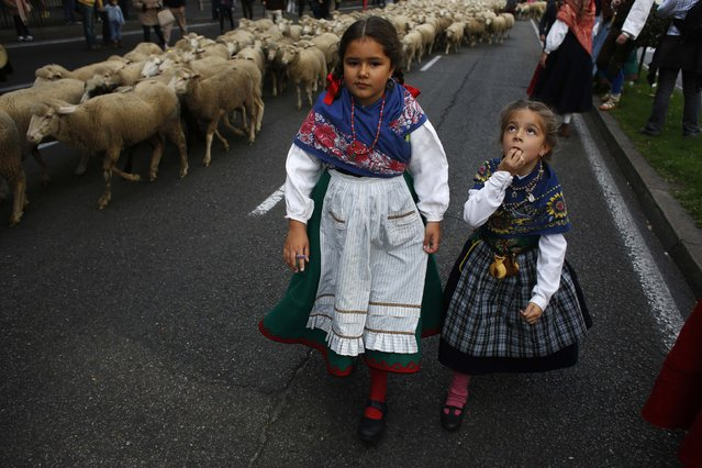Children in traditional attire walk next to sheep during the annual sheep parade through Madrid November 2, 2014. Shepherds parade the sheep through the city every year in order to exercise their right to use traditional routes to migrate their livestock from northern Spain to winter grazing pasture land in southern Spain. (Photo by Susana Vera/Reuters)
