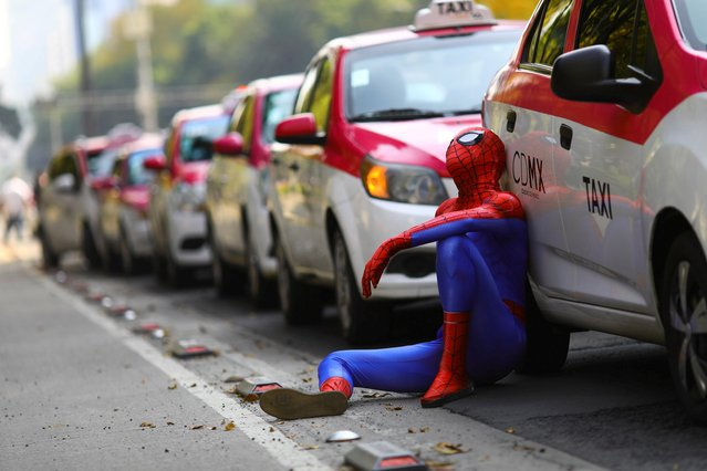 A person dressed up as Spider-Man sits next to the cabs as taxi drivers hold a protest against taxi-hailing apps such as Uber, Cabify and Didi at Angel de la Independencia monument, in Mexico City, Mexico, October 12, 2020. (Photo by Edgard Garrido/Reuters)