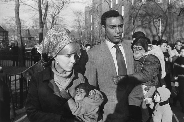 Central Park Zoo, New York, 1967. (Photo by Garry Winogrand)