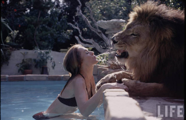 Melanie Griffith Grew Up With Lions