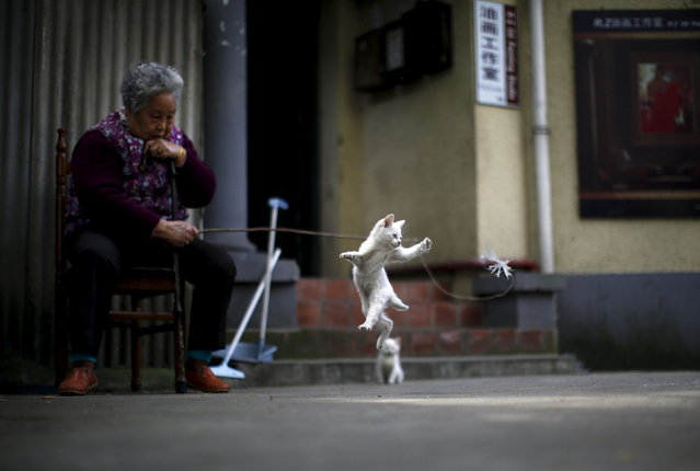 A woman plays with a kitten inside of a line house in downtown Shanghai April 12, 2015. (Photo by Carlos Barria/Reuters)