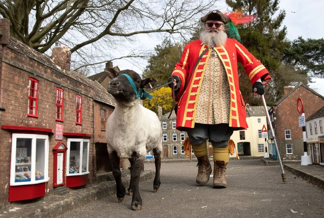 Chris Brown, the Town Crier and Mayor's Serjant of Wimborne Minster, in Dorset, exercises his right as an Honorary Freeman to drive sheep through Wimborne without charge on Wednesday, April 7, 2021, albeit through the Wimborne Model Town, to herald their re-opening on 12th April after the easing of lockdown restrictions. (Photo by Andrew Matthews/PA Images via Getty Images)