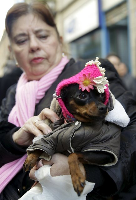 A woman holds her dog after it was blessed outside San Anton Church in Madrid, Spain, January 17, 2016. (Photo by Andrea Comas/Reuters)