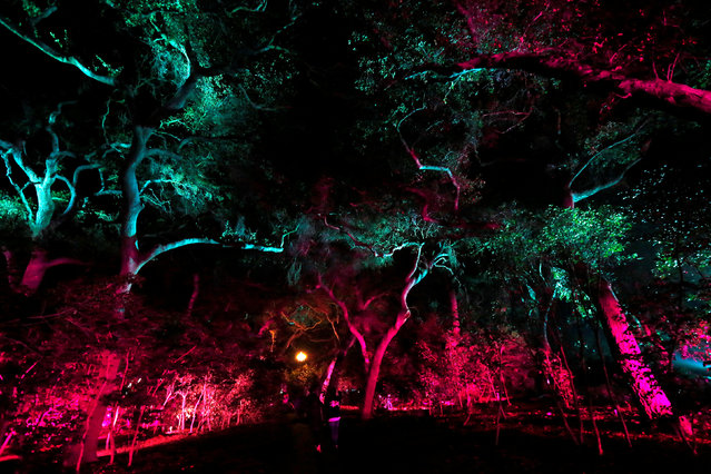 """Visitors walk through the exhibit """"Enchanted: Forest of Light"""" at Descanso Gardens in La Canada Flintridge, California U.S., December 9, 2016. (Photo by Mario Anzuoni/Reuters)"""