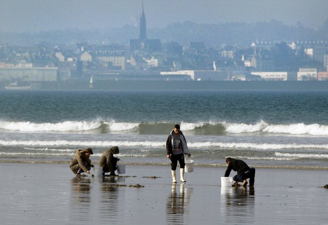 A family digs for shellfish during a record low tide on Kerlaz beach near Douarnenez in western France, March 21, 2015. (Photo by Mal Langsdon/Reuters)