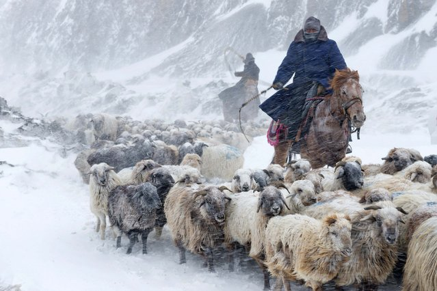 Kazakhs herd their sheep amid a heavy snowfall in Yili, Xinjiang Uighur Autonomous Region March 12, 2015. Around 400,000 livestock in Yili started the 10-day trip to their spring pasture at the end of winter, according to local media. (Photo by Reuters/China Daily)