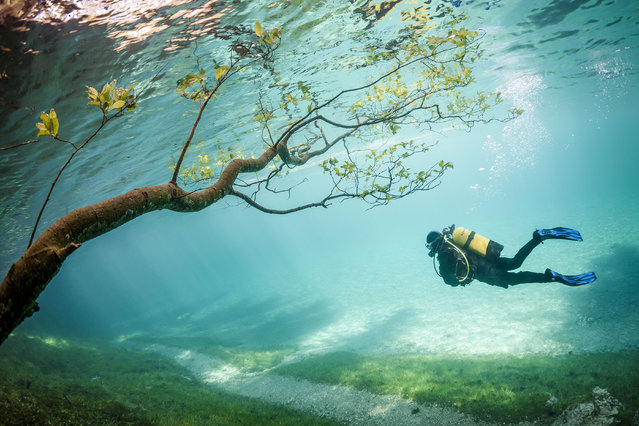 A diver in the flood water. Green Lake in Tragoess, Austria. (Photo by Solnet/The Grosby Group)