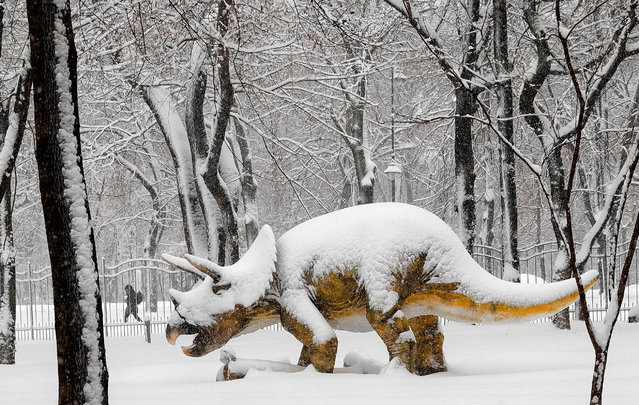 A woman walks on a snowy path by a life-size model of a dinosaur during a snow fall in Bucharest, Romania, Friday, January 6, 2017. Large areas of Romania were affected by blizzards which prompted authorities to close several major roads. (Photo by Vadim Ghirda/AP Photo)