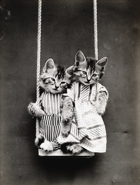 Photograph shows two kittens wearing clothes on a swing, 1914. (Photo by Harry Whittier Frees/Library of Congress)