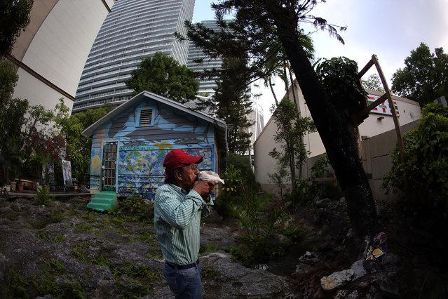 Ishmael Bermudez blows into a conch shell he found in the backyard of his home that is mostly surrounded by high rise buildings and ongoing construction projects on May 13, 2015 in Miami, Florida. Bermudez has been excavating the backyard of his home for the last few decades and believes it is a mystical place, has a natural spring and where he says he has found evidence of the earliest inhabitants of the area. (Photo by Joe Raedle/Getty Images)