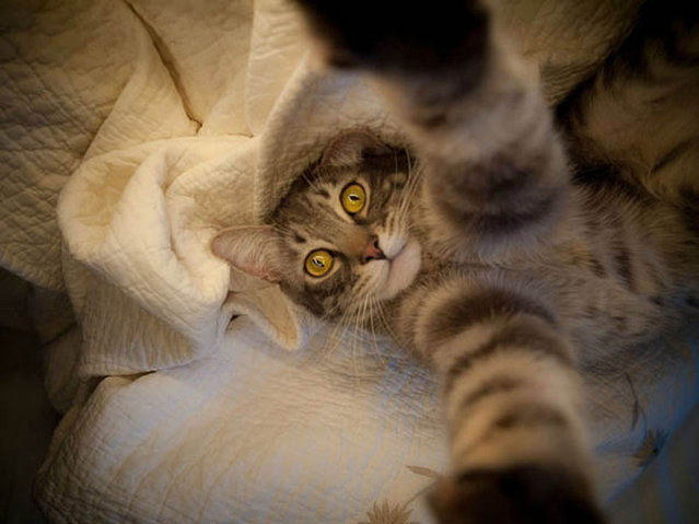 Cats Taking Selfies Part 2