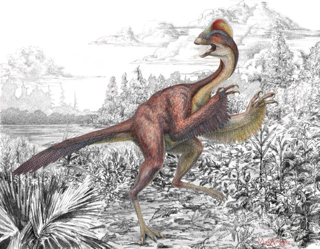 "Life reconstruction of the new oviraptorosaurian dinosaur species Anzu wyliei in its 66 million-year-old environment in western North America as seen in an undated handout illustration by Mark A. Klinger, Carnegie Museum of Natural History. Some 18,000 species, great and small, were discovered in 2014, adding to the 2 million already known, scientists said on May 21, 2015 as they released a ""Top 10"" list that highlights the diversity of life. (Photo by Mark A. Klingler/Reuters/Carnegie Museum of Natural History)"