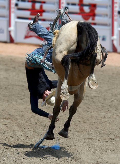 Jace Colley of Billings, Montana gets flipped off the horse Which Rocket in the novice saddle bronc event during the Calgary Stampede rodeo in Calgary, Alberta, July 10, 2015. (Photo by Todd Korol/Reuters)
