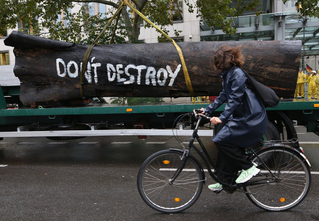 A cyclist passes what Greenpeace activists claim is the trunk of a tree from the Brazilian rainforest as they demonstrate nearby against Brazilian President Jair Bolsonaro outside the Haus der Deutschen Wirtschaft, or German Business House, offices in Berlin, Germany, 30 September 2019. The activists claim to be against financial cooperation between the German and Brazilian governments, as they claim the latter is the cause of ongoing fires in the Amazon rainforest. (Photo by Adam Berry/EPA/EFE)