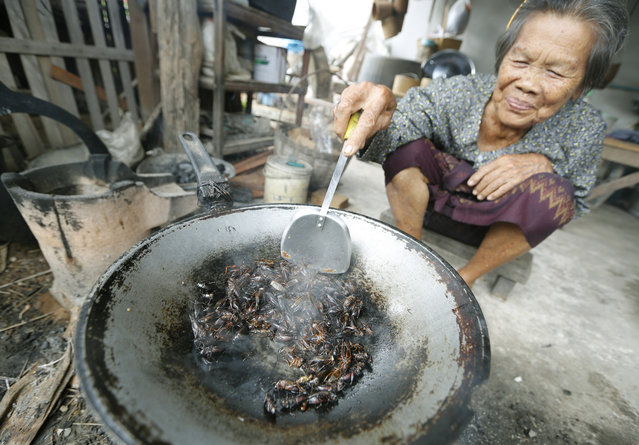 A Thai local villager cooks crickets in oil at her home in Khonkaen province, northeast of Thailand, 09 July 2013. Insects have long been on the menu in Thailand, but academics and the United Nation's Food and Agriculture Organization (FAO) officials are hoping they will become a more common global source of protein and nutrients to meet the need for growing world food requirements in the future. (Photo by Narong Sangnak/EPA)