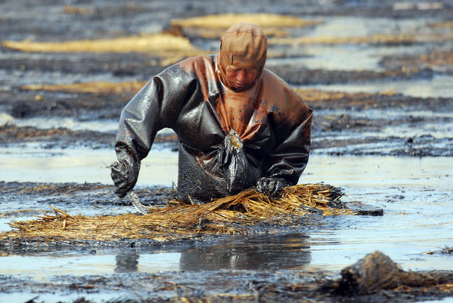 A labourer cleans up oil at the oil spill site near Dalian port, Liaoning province July 23, 2010. China's Xingang oil port has resumed some refined fuel loading for the domestic market, but fuel exports remain temporarily halted, industry officials said amid continuing efforts to clean up an oil spill at the country's major port of Dalian. (Photo by Reuters/Stringer)