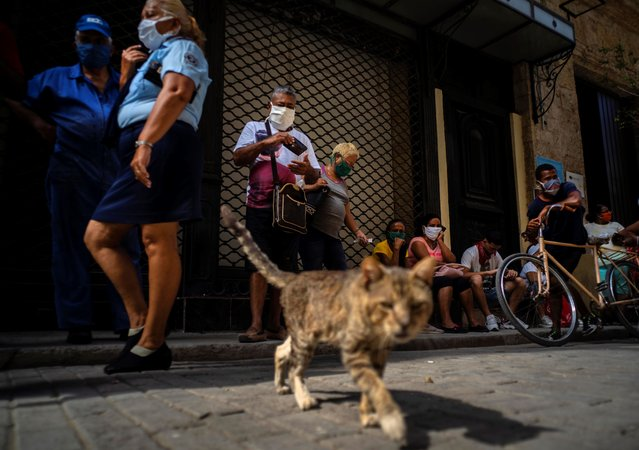 People wearing masks as a precaution against the spread of the new coronavirus, line up outside a minimarket to buy supplies while a stray cat walks past, in Havana, Cuba, Wednesday, May 6, 2020. Cuban authorities are requiring the use of masks for anyone outside their homes. (Photo by Ramon Espinosa/AP Photo)