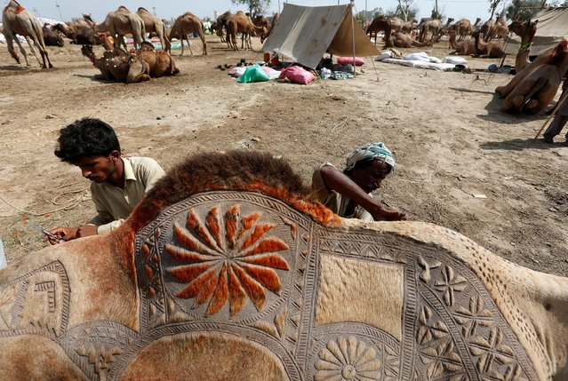 Men use scissors to make intricate decorative patterns on camel before putting it up for sale at a makeshift cattle market ahead of the Eid al-Adha festival in Karachi, Pakistan September 9, 2016. (Photo by Akhtar Soomro/Reuters)