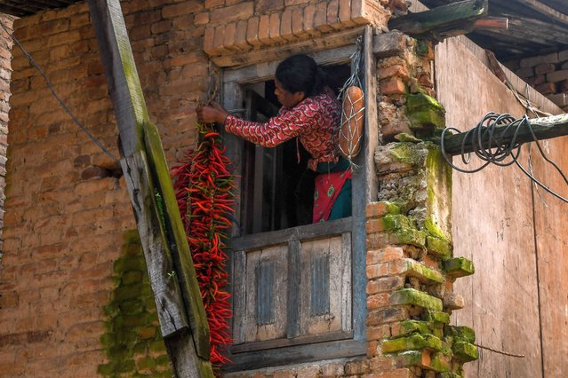 A woman hangs red chillies to dry outside her house at Khokana village on the outskirts of Kathmandu on August 5, 2020. (Photo by Prakash Mathema/AFP Photo)