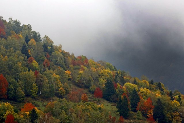 Late autumn colours mark a change in the season in the Vosges mountains in the Alsace region,  Eastern France, October 11, 2015. (Photo by Jacky Naegelen/Reuters)