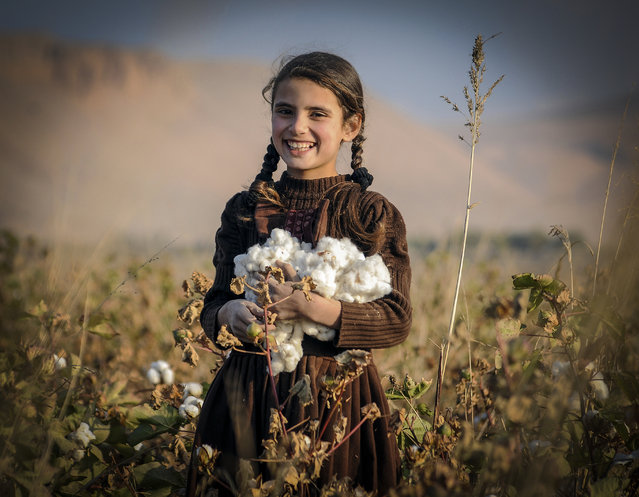 An Afghan girl harvests Cotton buds at a field on the outskirts of Balkh province, Afghanistan, November 15, 2014. (Photo by Sayed Mustafa/EPA)