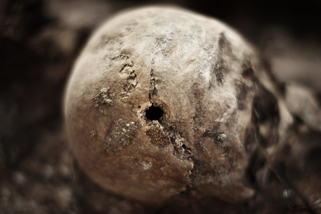In this photo taken on July 24, 2014, according to forensic experts, shows a bullet hole on a skull on an excavation during a search for the remains of those killed by their political ideology during and after the Spanish civil war  in El Estepar, Spain. (Photo by Daniel Ochoa de Olza/AP Photo)