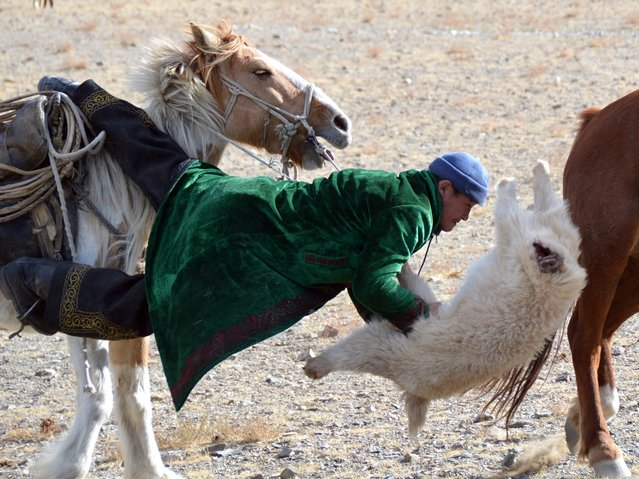 Sheepskin tug-of-war in the games at the Eagle Hunting Festival in Olgiy, Mongolia. (Photo by Brad Ruoho/The Star Tribune)
