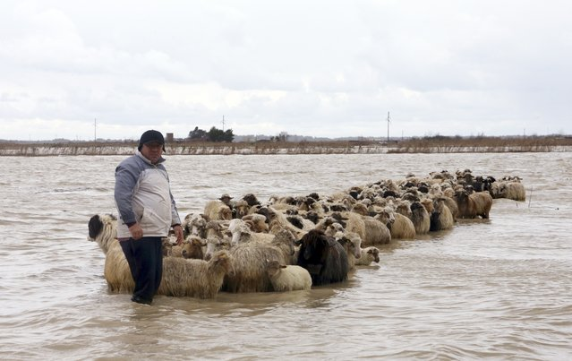 A man stands with his flock of sheep in floodwaters in the village of Darzez near the city of Fier, Albania February 2, 2015. Soldiers were deployed in Albania on Monday to help rescue villagers and strengthen flood barriers after rivers burst their banks under heavy rain that was forecast to continue through the week. No casualties were reported. (Photo by Arben Celi/Reuters)
