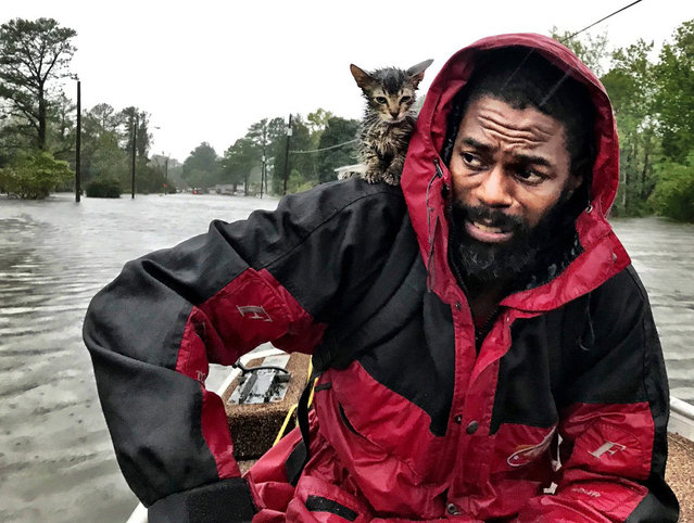 """Robert Simmons Jr. and his kitten """"Survivor"""" are rescued from floodwaters after Hurricane Florence dumped several inches of rain in the area overnight, Friday, September 14, 2018 in New Bern, N.C. (Photo by Andrew Carter/The News & Observer via AP Photo)"""