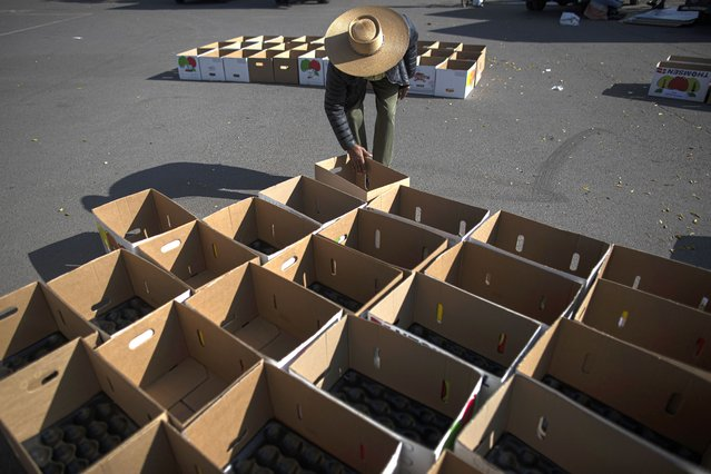 """A merchant of the """"Corazon Solidario"""" fair, wearing a Chilean traditional hat known as a Chupalla, prepare boxes with vegetables and fruits for those facing economic hardship due to the COVID-19 pandemic in Santiago, Chile, Monday, May 3, 2021. The """"Corazon Solidario"""" fair is a 12-year-old nonprofit where volunteers help during disasters. (Photo by Esteban Felix/AP Photo)"""