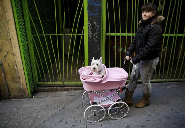 A woman pushes her dog in a baby carriage after it was blessed outside San Anton Church in Madrid, Spain, January 17, 2016. (Photo by Andrea Comas/Reuters)
